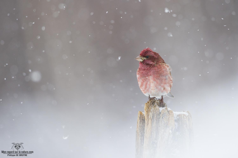 Oiseaux d'hiver (1)
