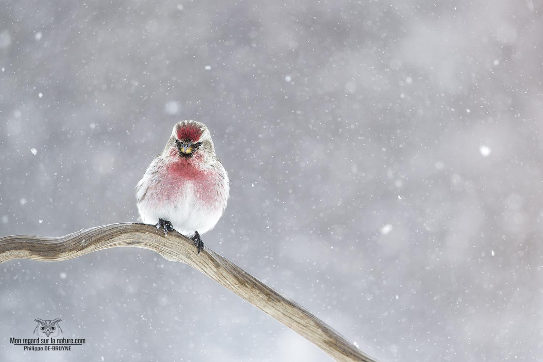 Oiseaux d'hiver (2)