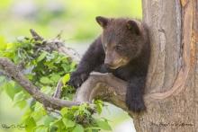 Jouer dans les arbres un de leur passe temps favoris !!