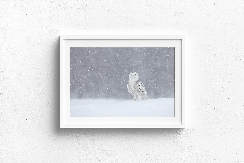 Hafrang-des-neiges-sous-la-tempête-de-neige