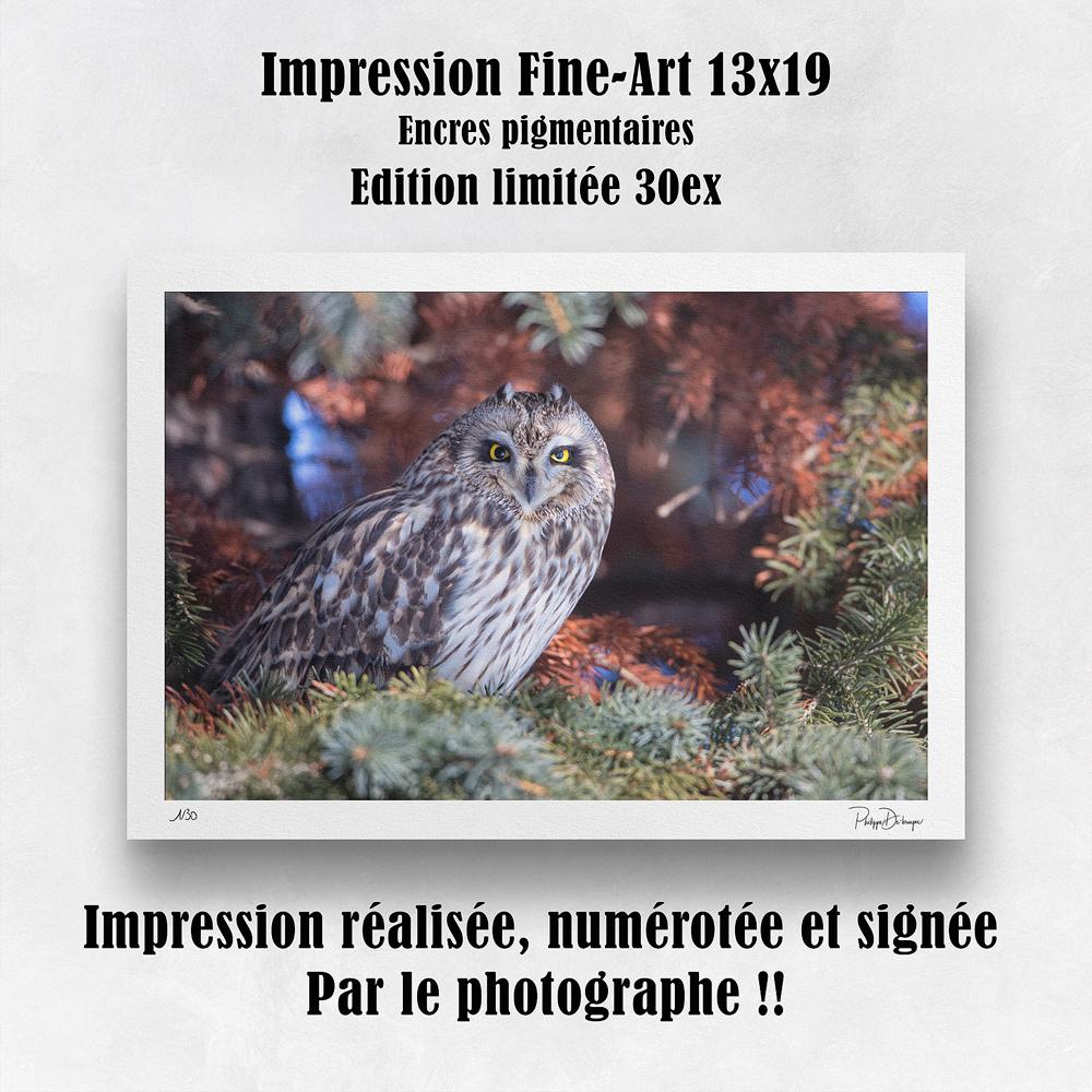 Impression format 13x19 po