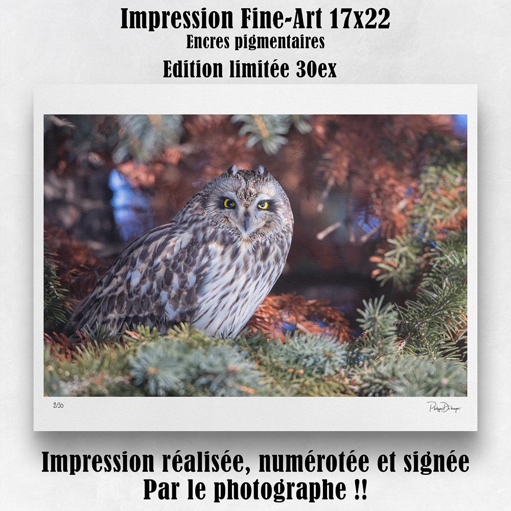 Impression 17x22 po