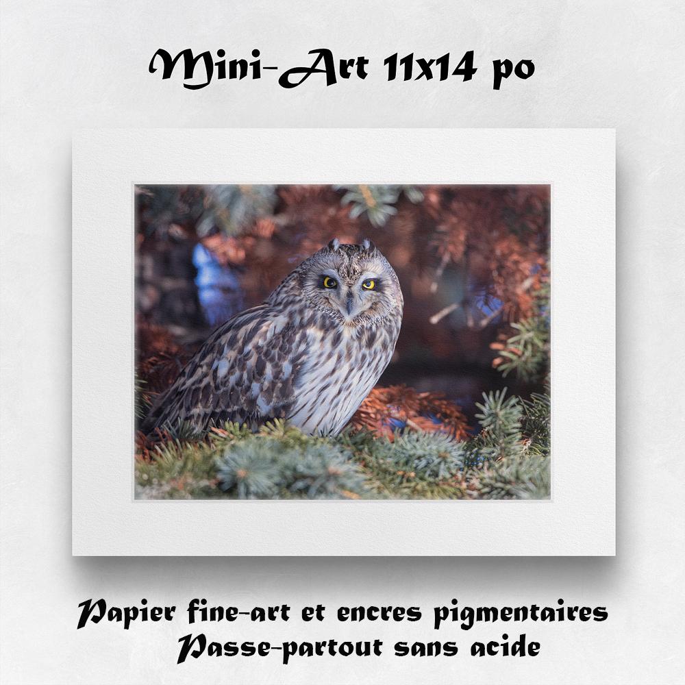 Mini-art 11x14 po