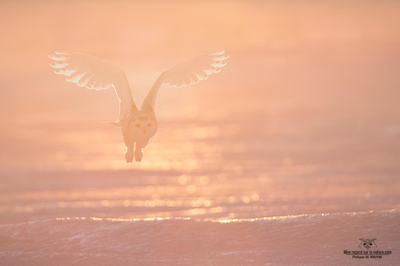 L'ange blanc dans la lumière du matin