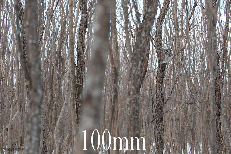 100mm-5D4_2364-copie