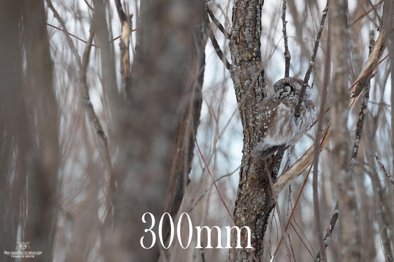 300mm-5D4_2368-copie