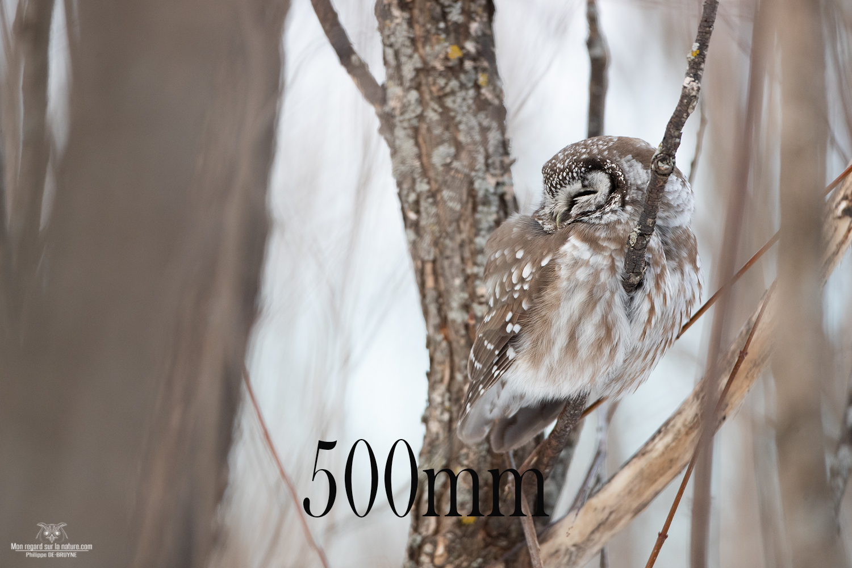 500mm-_02I6615-copie