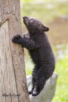 L'acrobate est rapide !!