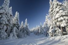 Sentier moto neige