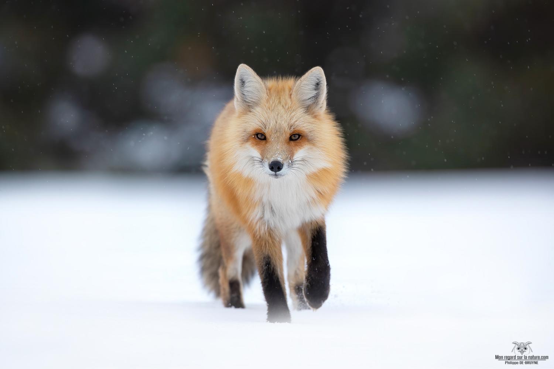 Magique avec la neige